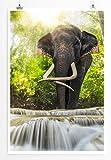 Eau Zone Home Bild - Tierbilder – Elefant am Erawan