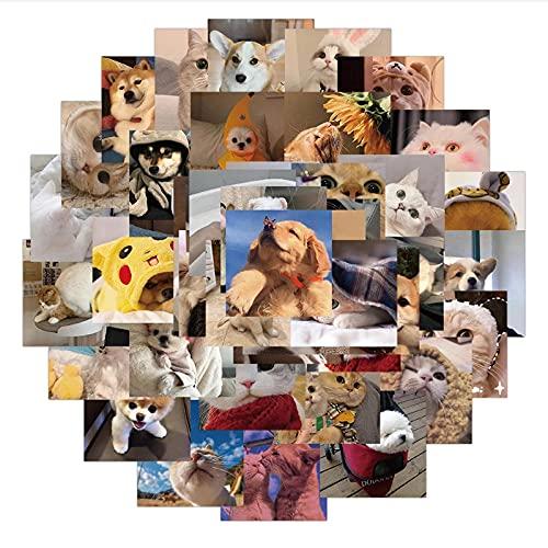 WYZDGTD 48 Piezas / 2 Juegos Lindo Gato Perro Expresión Meme Pegatinas Portátil Guitarra Equipaje Teléfono Impermeable Graffiti Pegatina Calcomanía Chico Juguetes Clásicos