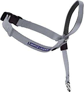 great dane head halter