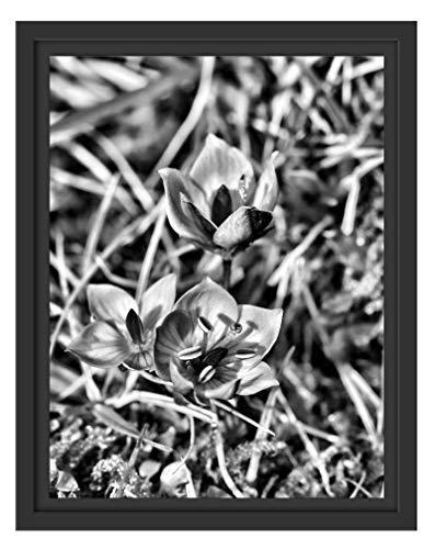 Picati Prachtige Enzian in schaduwvoegen fotolijst   kunstdruk op hoogwaardig galeriekarton   hoogwaardige canvasfoto alternatief 38x30