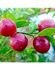Haritham Rare Red Lemon Australian Red Lime Healthy Live Plant, 1 Piece