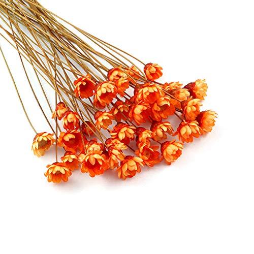 llwei258 Kristallen epoxyvorm UV-lijm mini madeliefjes gedroogde bloem armband ring vulstof nail art handmatige doe-het-zelver handwerk accessoire Or