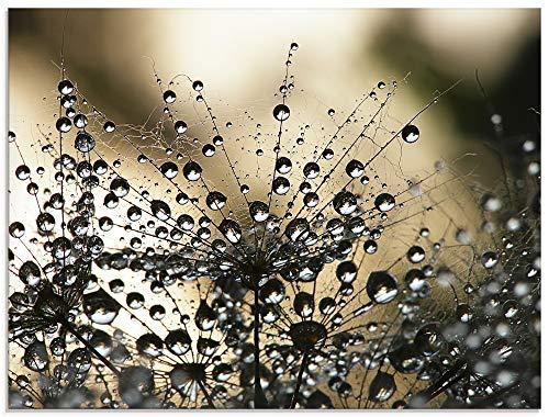 Artland Glasbilder Wandbild Glas Bild einteilig 80x60 cm Querformat Natur Blumen Pflanzen Morgentau Löwenzahn Tropfen Wasser Moderne Kunst S5YR