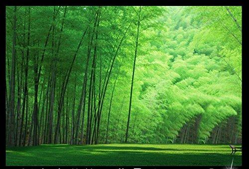 Fotomural 3D de alta calidad, papel pintado fotográfico de pelo de bambú, adhesivo 3D personalizado para pared, 430 cm x 300 cm