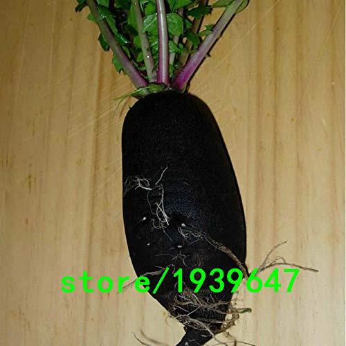 AGROBITS Vente chaude rares Radis noir Graines de légumes Jardin et cour de ferme vert non OGM légumes biologiques à long Radis Graines 100PCS: Autre