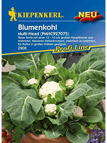 Blumenkohl Multi Head, PMHC927075