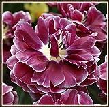 Bulbos de Tulipán Mixtos,Tulipan Bulbo,Rico En Color Y Crece Bien,Jardinería,Plantas Mágicas, Jardines Verdes De Fama Mundial,De Un Verde Exuberante-20 Bulbos,2