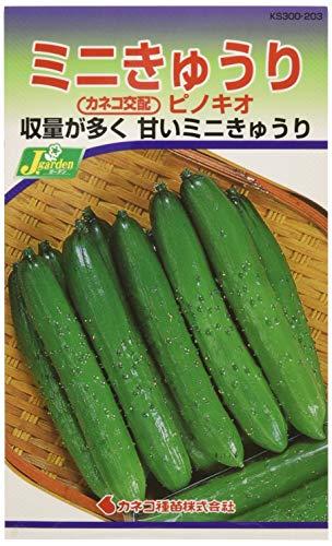 カネコ種苗 園芸・種 KS300シリーズ ピノキオ ミニきゅうり 野菜300 203