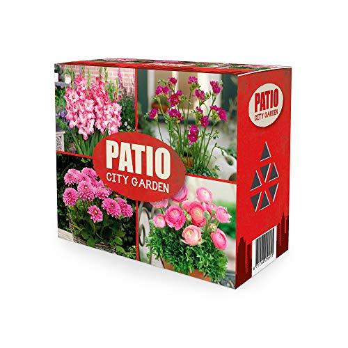 40x Blumenzwiebel Mix 'Patio City Garden...