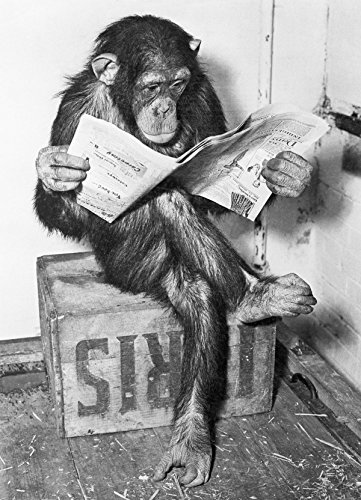 Close Up® Poster - Schimpanse liest Zeitung | Chimpanzee Reading Newspaper - Schwarz- Weiß (91,5 x 61cm)