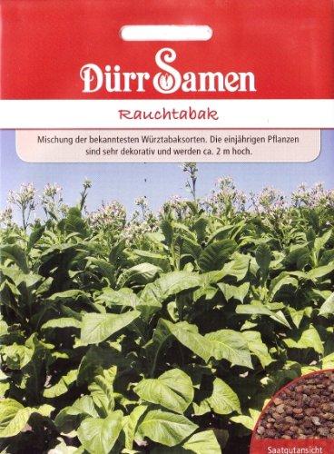 Echter Rauchtabak, Nicotiana tabacum, ca. 80 Samen