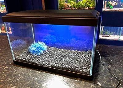 Aqua Ciano 20 Tropical 17L Aquarium with LED Lights, Heater & Filter (BLACK) by AQUA