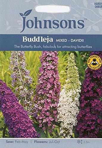 Portal Cool 3: Johnsons Semi Buddleja davidii misti farfalla Bush Seed