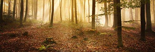 wandmotiv24 Küchenrückwand Wald am Morgen 180 x 60cm (B x H) - Acrylglas 4mm Nischenrückwand Spritzschutz Fliesenspiegel-Ersatz M0391
