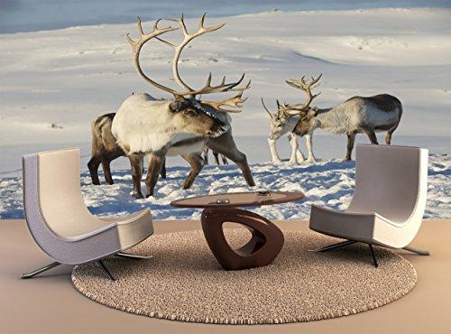 Fotobehang Rendieren Natuurlijke Milieu Tromso Regio Noord Noorwegen Muur Art Decor Fotobehang Poster Hoge Kwaliteit Print