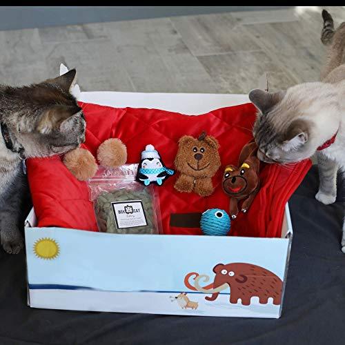 BoxCat Luxury Subscription Box + Large Cat Item