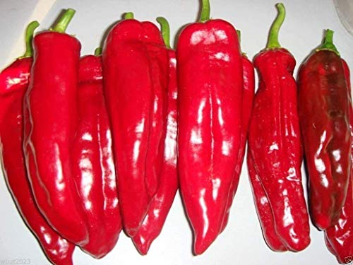 Sweet pepper 'Red bull's horn'50 Seeds, Open Pollinated, Heirloom, Organic !