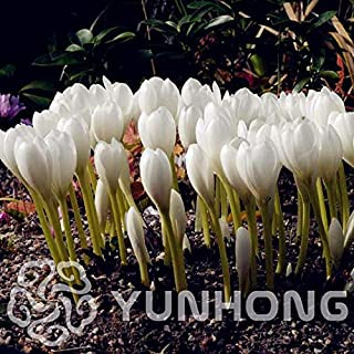 Accessory Home - Hot Sales! 100 Pcs Mini Bonsai Colchicum Plant Indoor Home Miniature Flower Pot Plants Four Seasons