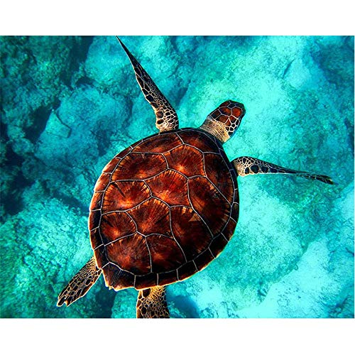 DKIPN malen nach Zahlen Schildkröte Meer Schwimmen Tier DIY Digitale Malen nach Zahlen Moderne Wandkunst Leinwand Malerei einzigartiges Geschenk Home Decor 40 * 50cm(ohne Rahmen)