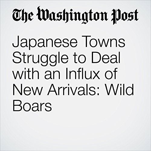 Japanese Towns Struggle to Deal with an Influx of New Arrivals: Wild Boars copertina