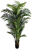 Seidenblumen Roß Hawaiipalme 150cm DA künstliche Zimmerpalme Palmen Kunstpalmen Kunstpflanzen