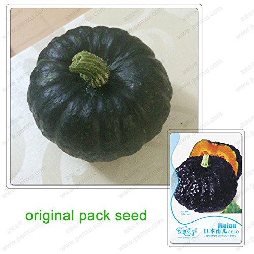 10 graines/Pack, graines de citrouille japonaise, citrouille Blackl, graines de légumes en pot balcon légumes