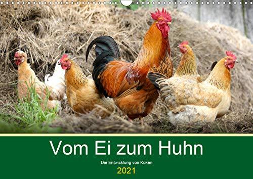 Vom Ei zum Huhn. Die Entwicklung von Küken (Wandkalender 2021 DIN A3 quer)