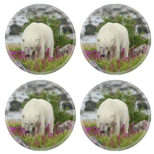 MSD Natural Round Drink Coaster set of 4 Image ID: 23569369 Canadian walking in the colorful arctic tundra of the Hudson Bay