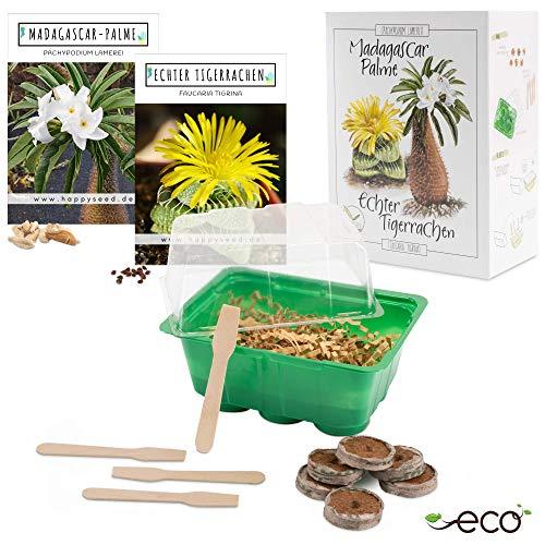 Kakteen Starter Kit Anzuchtset - Pflanzset aus Mini-Gewächshaus, Kaktus Samen & Erde - nachhaltige Geschenkidee für Pflanzenfreunde (Samen: Madagascar Palme + Echter Tigerrachen)
