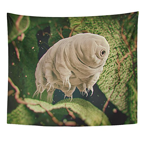 Emvency Tapestries Print 50x60 Inches Tardigrada Tardigrade Water Bear 3D Rendered Moss Microscope Biology Eight Wall Hangings Home Decor