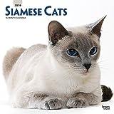 Siamese Cats - Siam-Katzen 2019 - 18-Monatskalender (Wall-Kalender)