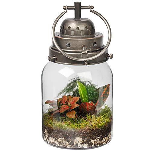 Ecoworld Tropenlaterne Ökosystem-Lampe - Beleuchtung - Ø 16 cm Höhe 30 cm - Silber