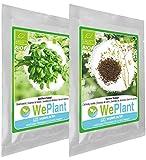 BIO Basilico & Cumino - Set di semi di piante di erbe - interno/esterno