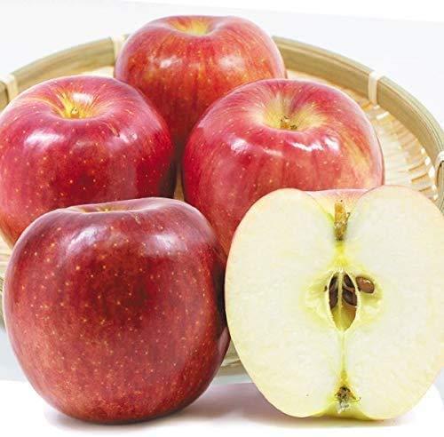 国華園 りんご 山形産 千秋 10kg ご家庭用 林檎