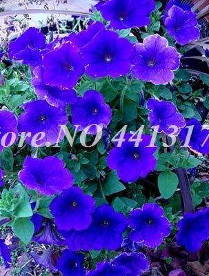 RETS 100 pcs Color Mezclado Petunias Colgantes seedss, el Crecimiento de la Petunia del jardín de la Petunia Seedss Natural para el jardín de la Flor Macetas Macetas: 2