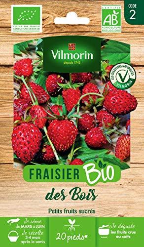 Vilmorin - Fraisier bio - variété vivace et stolonifère, très productive - Petits fruits sucrés - Semences issues d'une culture conforme aux règles de l'agriculture biologique