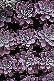 YBGW Pintura al óleo lienzoJardín Rosas Carteles Impresiones hortensias suculentas Lienzo Pintura nórdica Flor Pared Cuadros para Sala de Estar Impresiones decoración del hogar sin bordes-50X70cm
