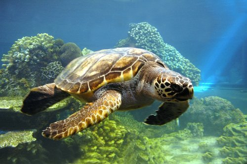 3D-Postkarte Schildkröten: