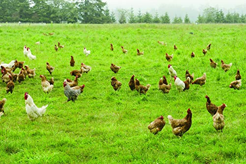 Intermountain West Poultry Pasture Blend (1000 sq ft)