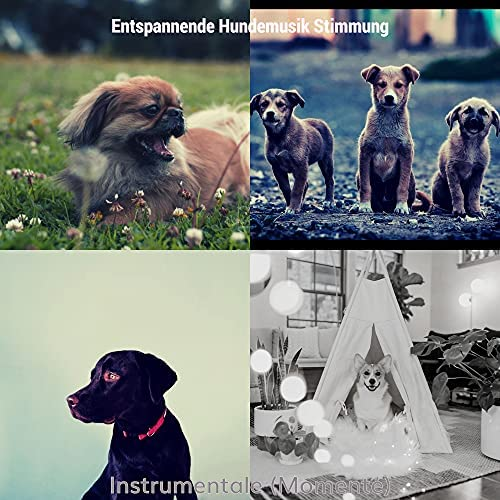 Entspannende Hundemusik Stimmung