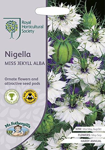 Mr Fothergills Blume RHS Nigella Miss Jekyll Alba 700 Samen