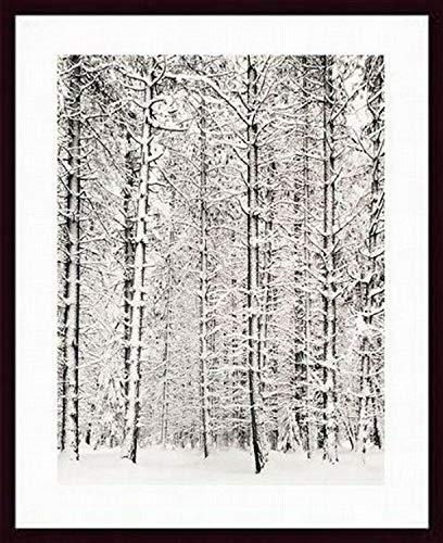 Printfinders Pinienwald im Schnee Yosemite National Park von Ansel Adams Holz gerahmter Kunstdruck