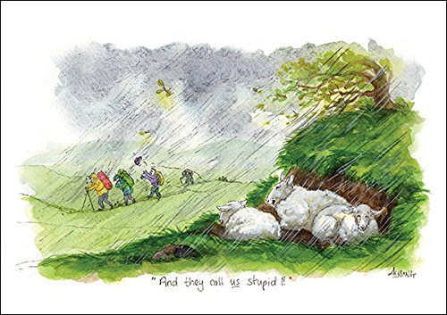 And they call us stupid Humorous Sheep themed greeting card