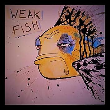 Weak Fish