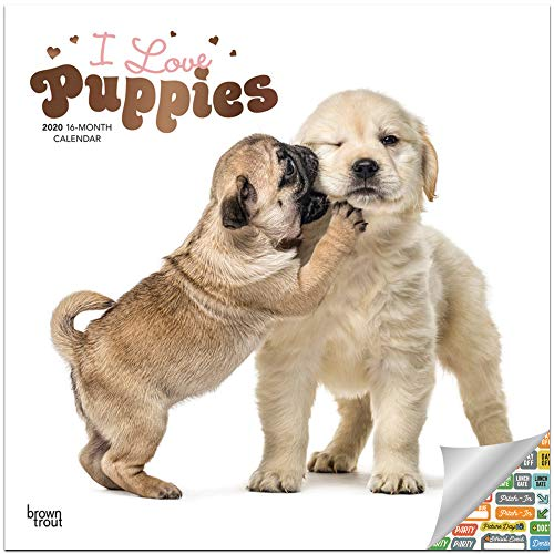 I Love Puppies Calendar 2020 Set - Deluxe 2020 Puppies Wall Calendar with Over 100 Calendar Stickers (Puppies Gifts, Office Supplies)