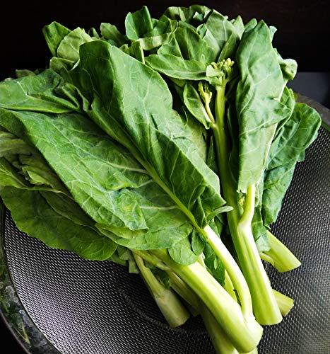 Gaea's Blessing Seeds - Organic Gailan 1000+ Seeds Non-GMO Chinese Broccoli Chinese Kale Brassica Oleracea Kailaan Kai LAN 93% Germination Rate Net Wt. 5.0g