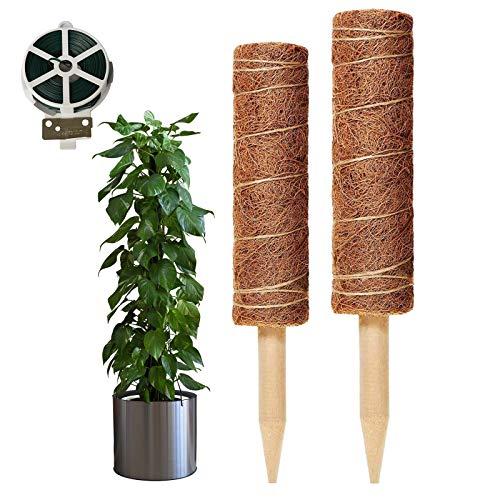 Eyerayo Moosstangen, 2 Stück Kokosfaser-Totem-Pflanzenstützstäbe mit Pflanzenverschlüssen zur Unterstützung von Topfpflanzen (2 Moosstäbe, 1 Rolle Bindebänder)