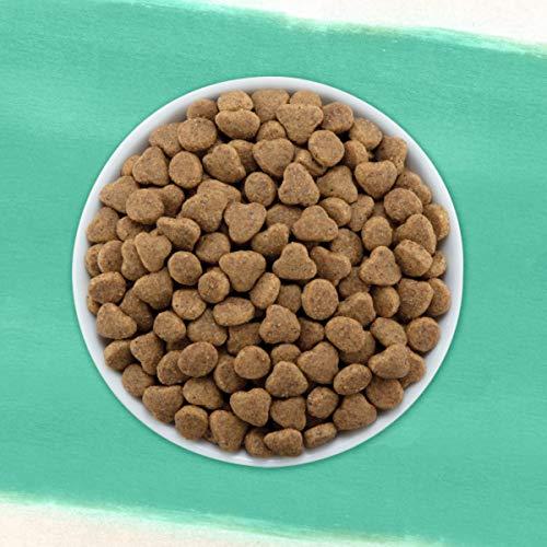 Purina Beyond Grain Free, Natural Dry Cat Food, Grain Free Ocean Whitefish & Egg Recipe - 11 lb. Bag