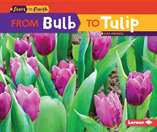 From Bulb to Tulip (Start to Finish, Second)