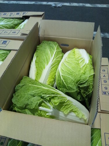 白菜 九州各県産 1ケース3玉〜4玉入